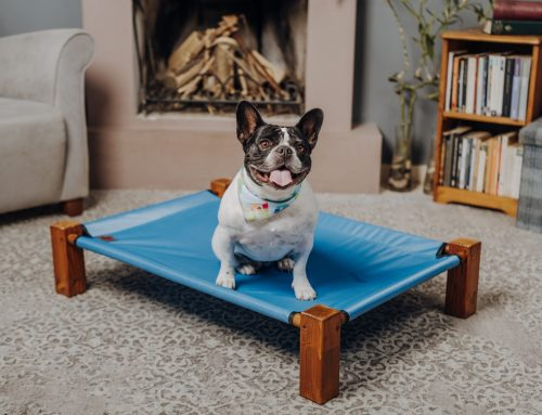 Interesting Facts on French Bulldogs – Essentials to Always Keep in Mind